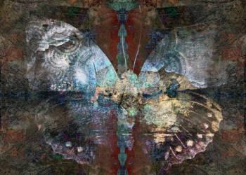 Significado da borboleta, simbolismo e espírito animal