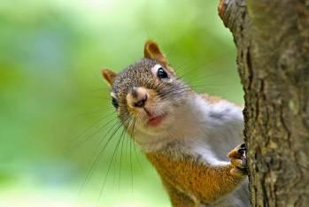 Simbolismo e significado do esquilo