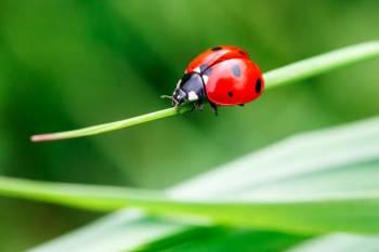 Simbolismo e significado do besouro