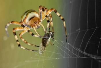 Simbolismo, significado e o espírito da aranha animal