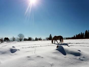 Qual é o signo do zodíaco de 4 de janeiro?