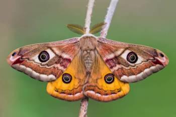 Simbolismo, sonhos e mensagens da mariposa