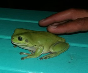 A frog I discovered at night