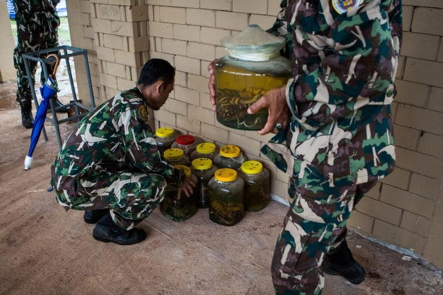 DNP officers move tiger cub specimens in jars of formaldehyde for the media to see. Each jar was labelled with the cause of death and dates of each cub from years past. Cubs have a high rate of infant mortality in both captivity and the wild.