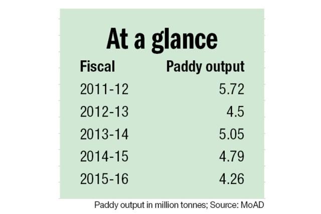 Paddy plantation, paddy output