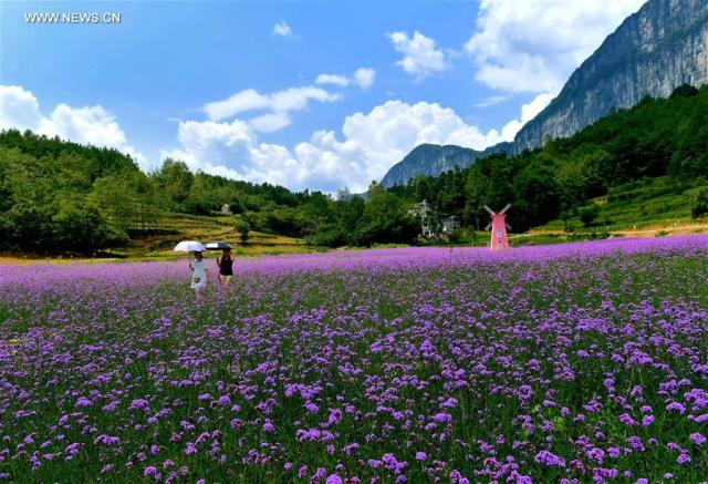 Flowers in Central China Village 4