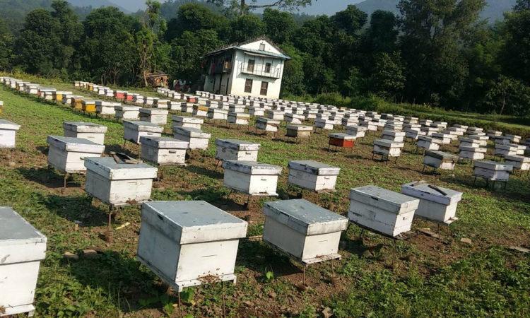 bee-hives-in-dang