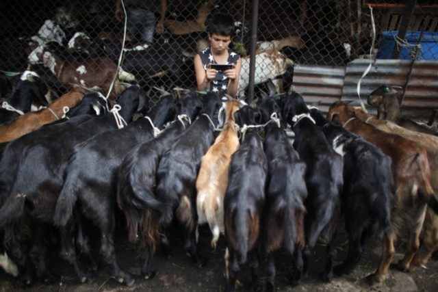 A young Nepalese goat vendors plays with his mobile phone while waiting for customers at a market during Dashain, the biggest festival in Nepal, in Kathmandu, Nepal, Wednesday, Oct. 5, 2016. Photo: AP