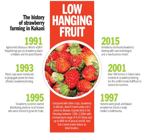 Strawberry story3 | Glocal Khabar
