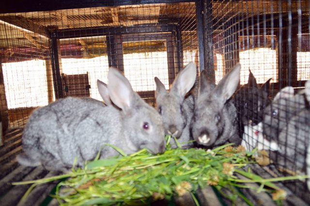 Story of starting first commercial rabbit farm in Nepal: The
