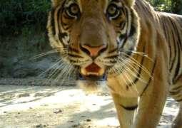 Shuklaphanta National Park- Glocal Khabar