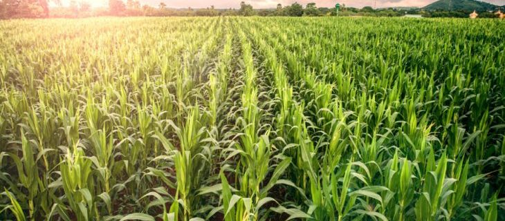 Subsidized loan to be provided by Agriculture Development Bank
