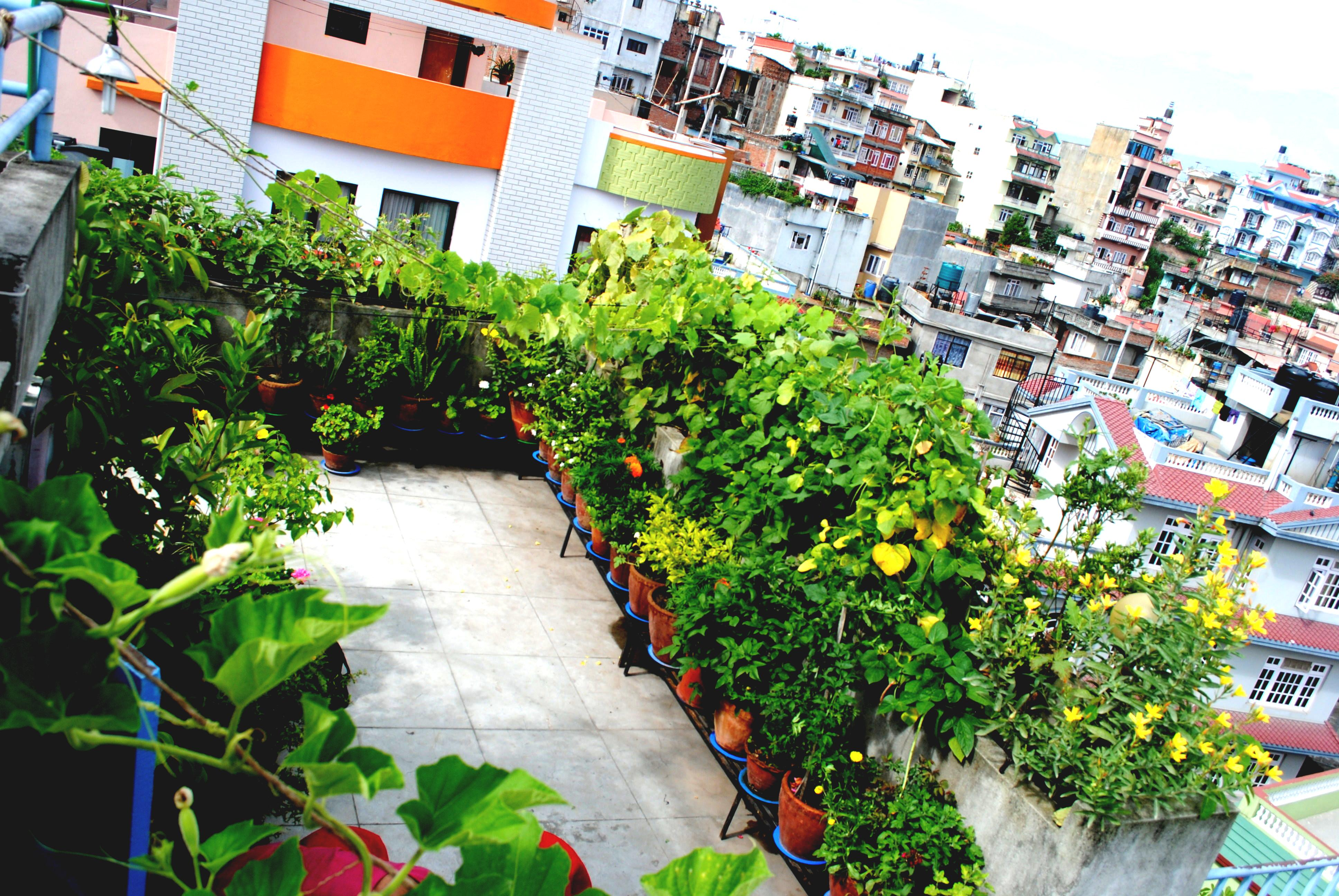 Rooftop Gardening Making Roof Eye Catching Glocal Khabar