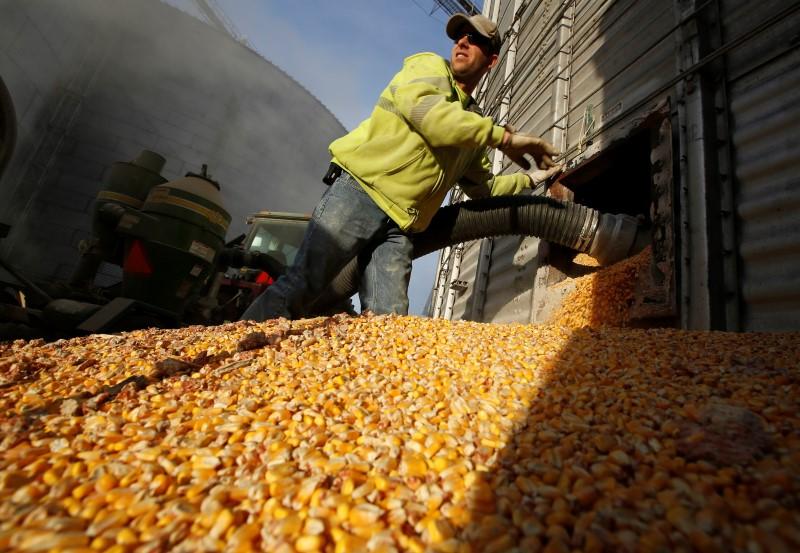 © Reuters.  Deral reduz estimativa de 2ª safra de milho do Paraná para 12,13 mi t