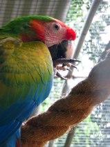 Parc Zoologique et Forestier de Nouméa - Ara