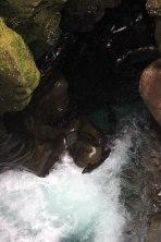 Milford Sound - Chasm