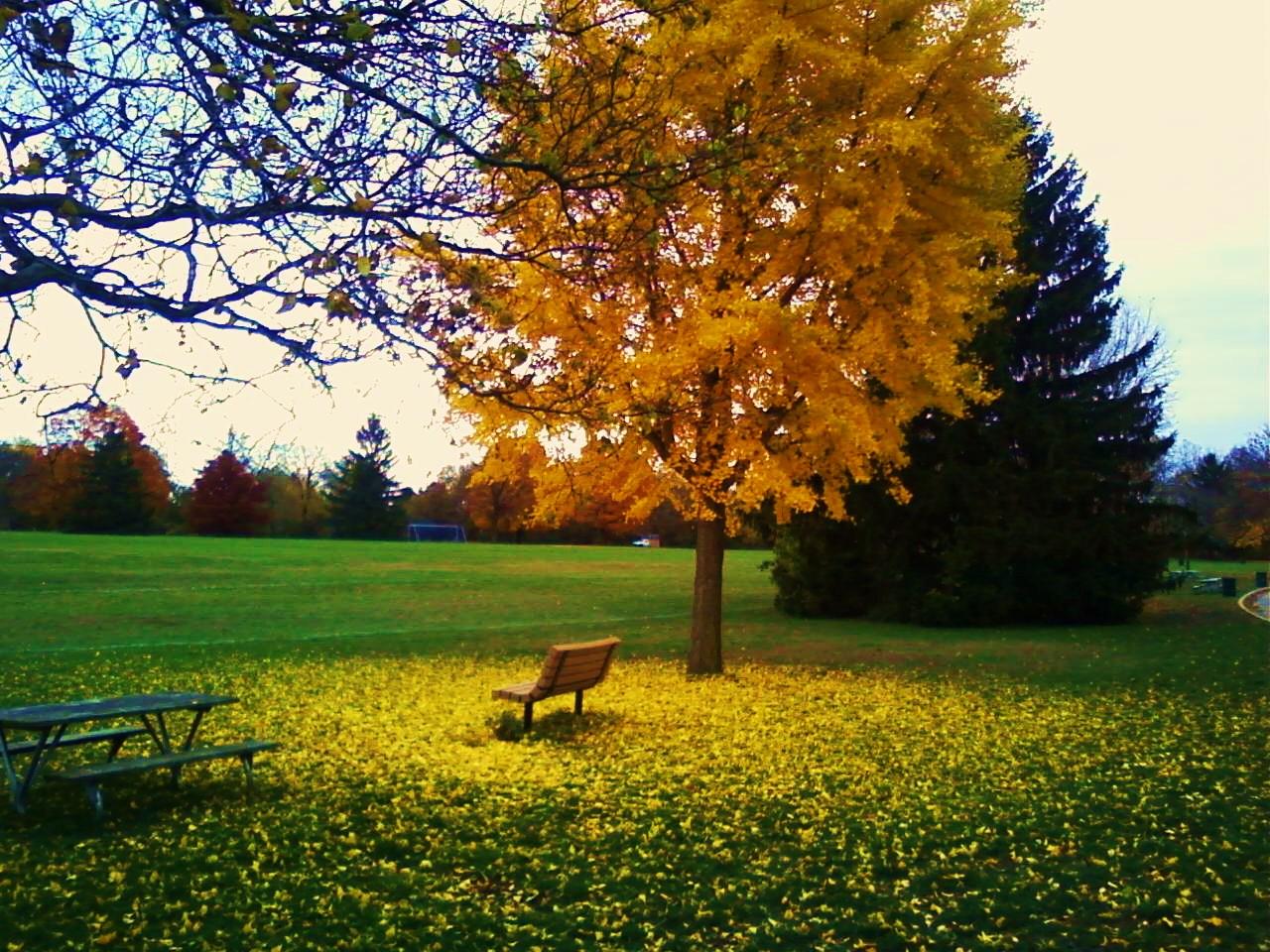 Fall! 2009, Detweiller Park