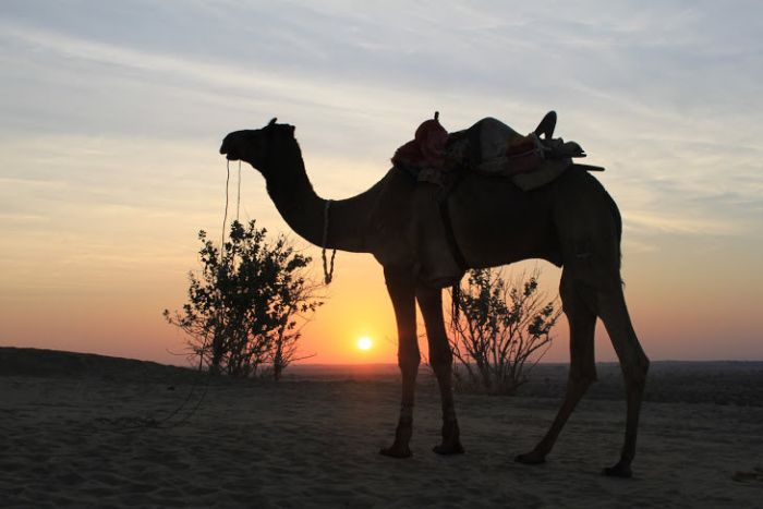 Desert sunrise glorious sunrise India
