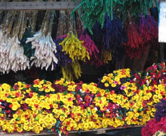 kodai year-long-lasting flowers