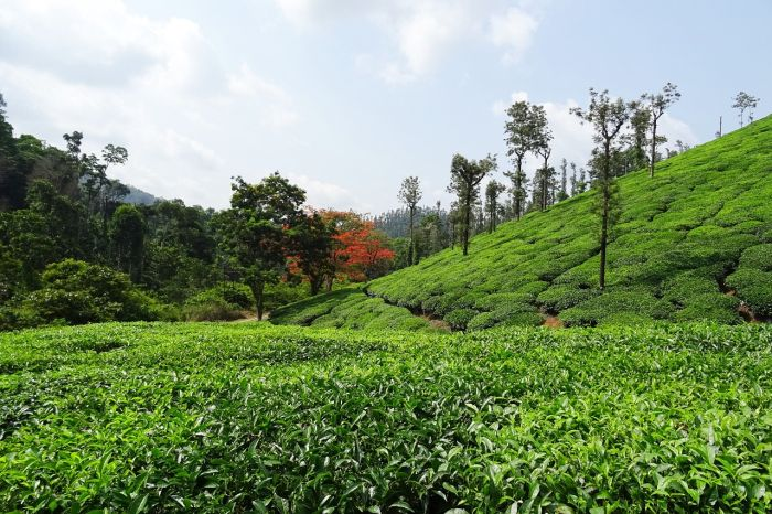 Chikmagalur - top place to visit in India