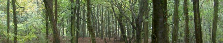 Standish Woods