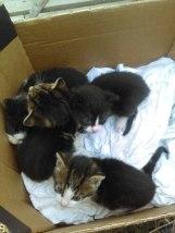 Małe kotki do adopcji, Poznań