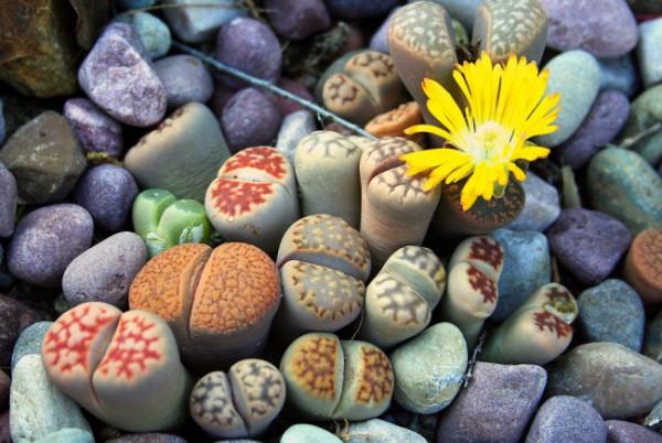 В Доме природы открылась выставка кактусов и суккулентов ...
