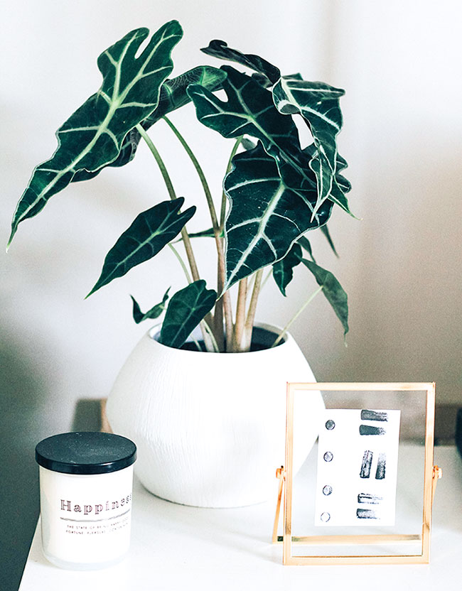 plant and candle on a table