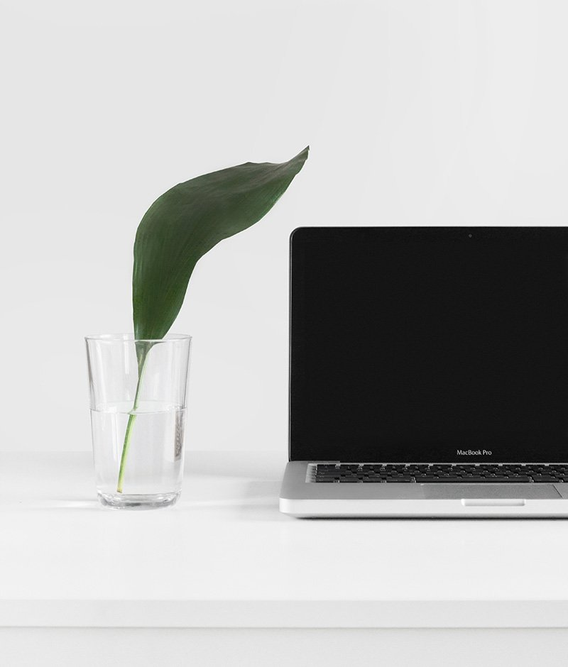 plant with a laptop