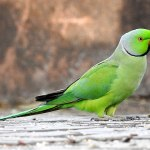 Last Remaining Author Paid by Parakeet
