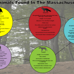 Gloucester Police Provide Safety Tips for Encountering Wildlife