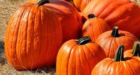 best pumpkin recipes, leftover pumpkin recipes