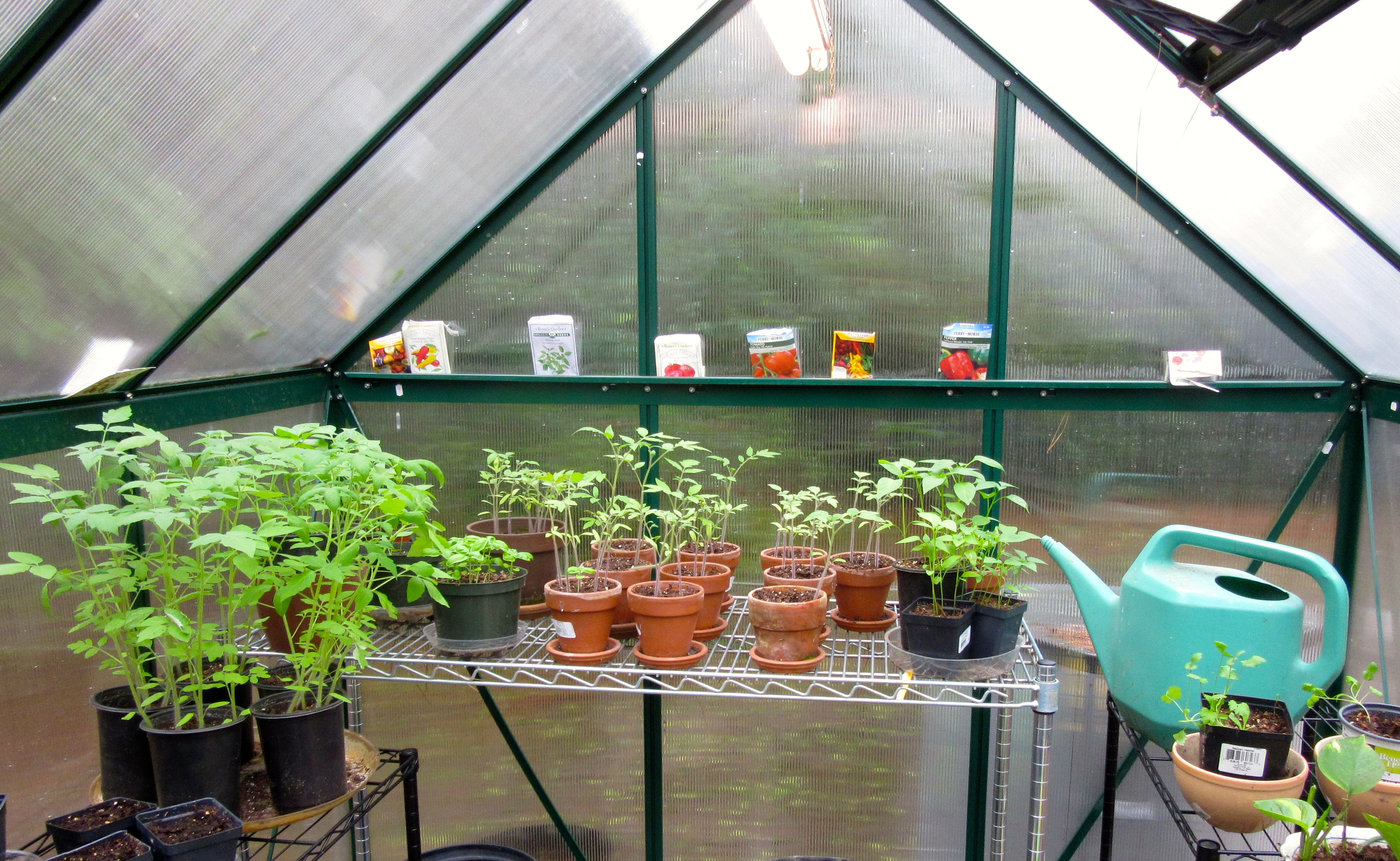Dreaming of Summer; Glad for the Greenhouse