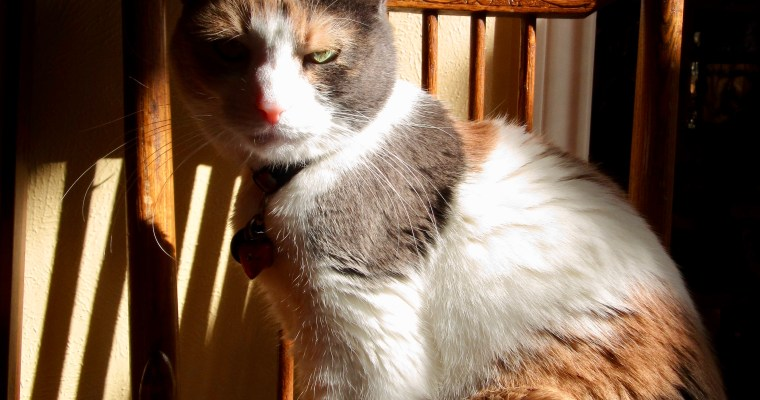 Two Cat Haiku: Made Thoughtful by Sunlight