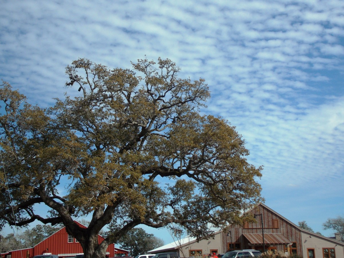 round-top-daytime-sky
