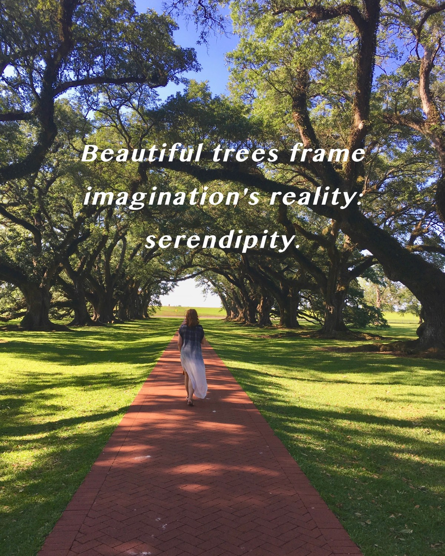 Oak Tree Serendipity Haiku Rose