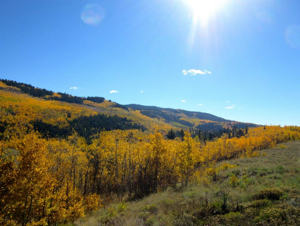 Flashback to Colorado's Fall Colors; Looking Forward to a Train Ride Along the Mountainside
