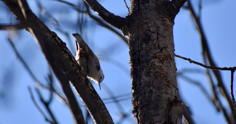 Haiku: Bird Meditation (NaHaiWriMo)