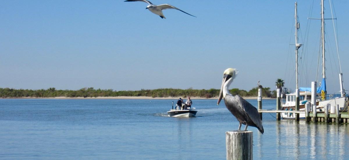 Birdsong Haiku and Bird Appreciation 101