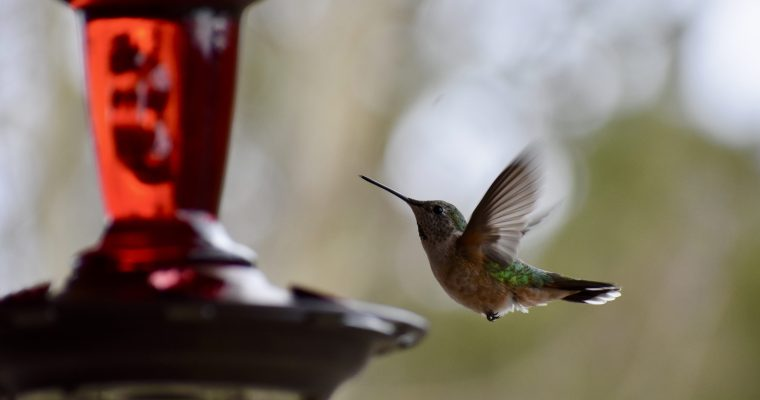 Hummingbird Haiku (Times Two)