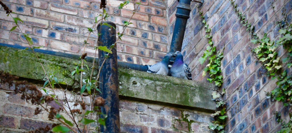 Peacefulness and Pigeons in the Courtyard at the Museum of Edinburgh