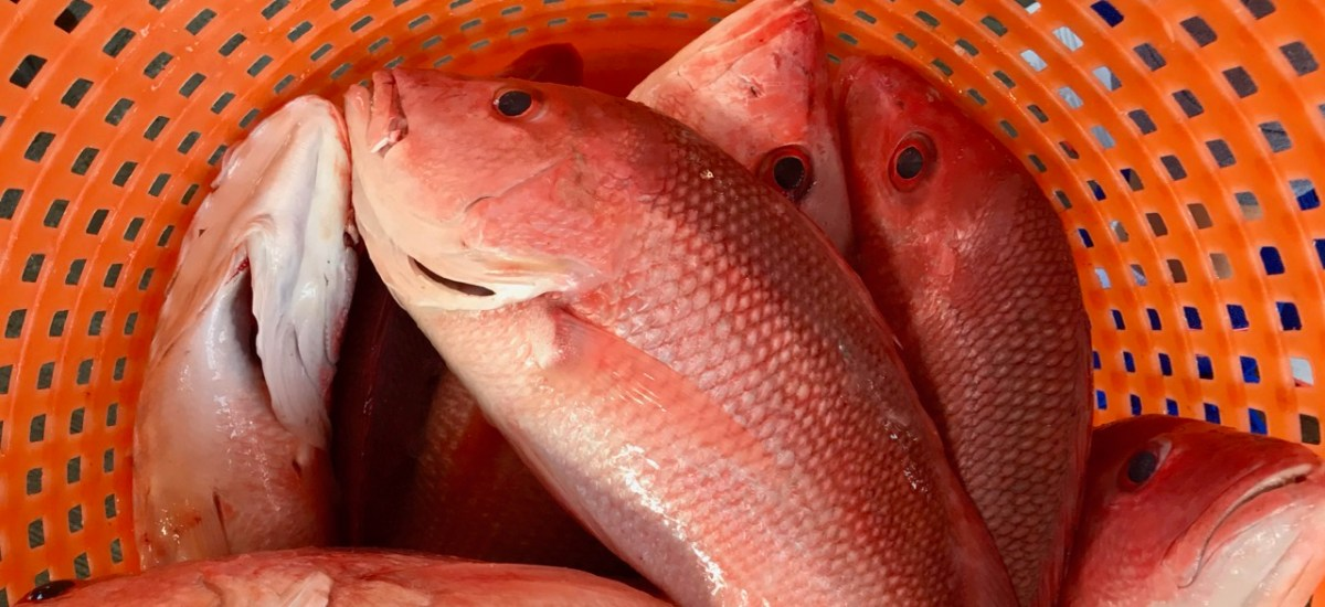 Still Life: Redfish in Orange Basket