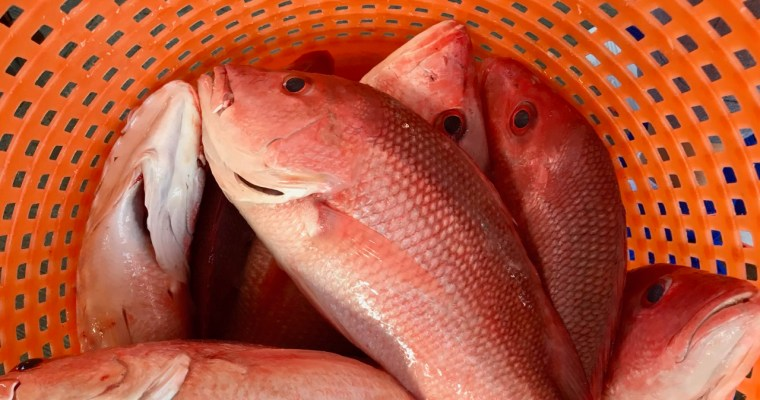 Still Life: Redfish in Orange Basket
