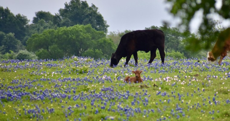 Happy Spring to You, from Texas