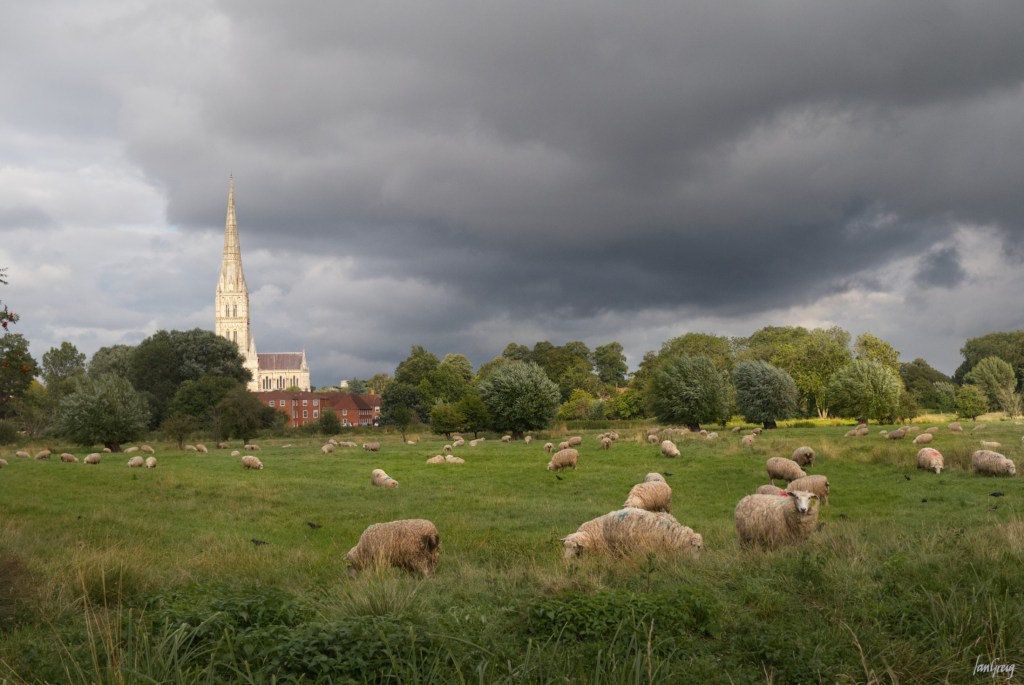 Salisbury Cathedral across water meadows
