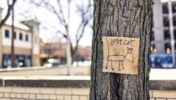 lost-cat-lustiger-kinderspruch