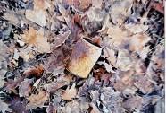 Kalte Büchse I