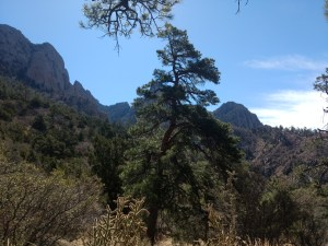 I finally decided to start hiking the Sandias. Read about what gear I've purchased, my favorite trails, and a little-known secret hiding in plain sight throughout the Sandias!