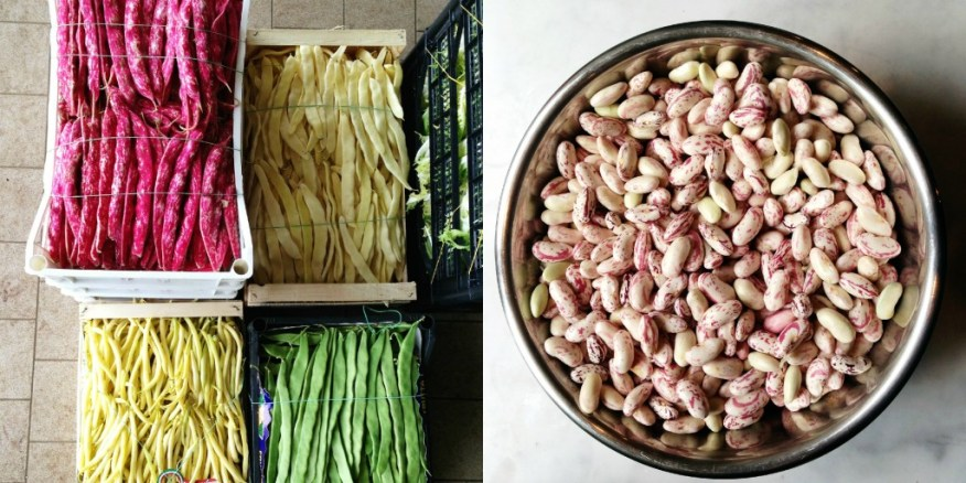beans in Italy