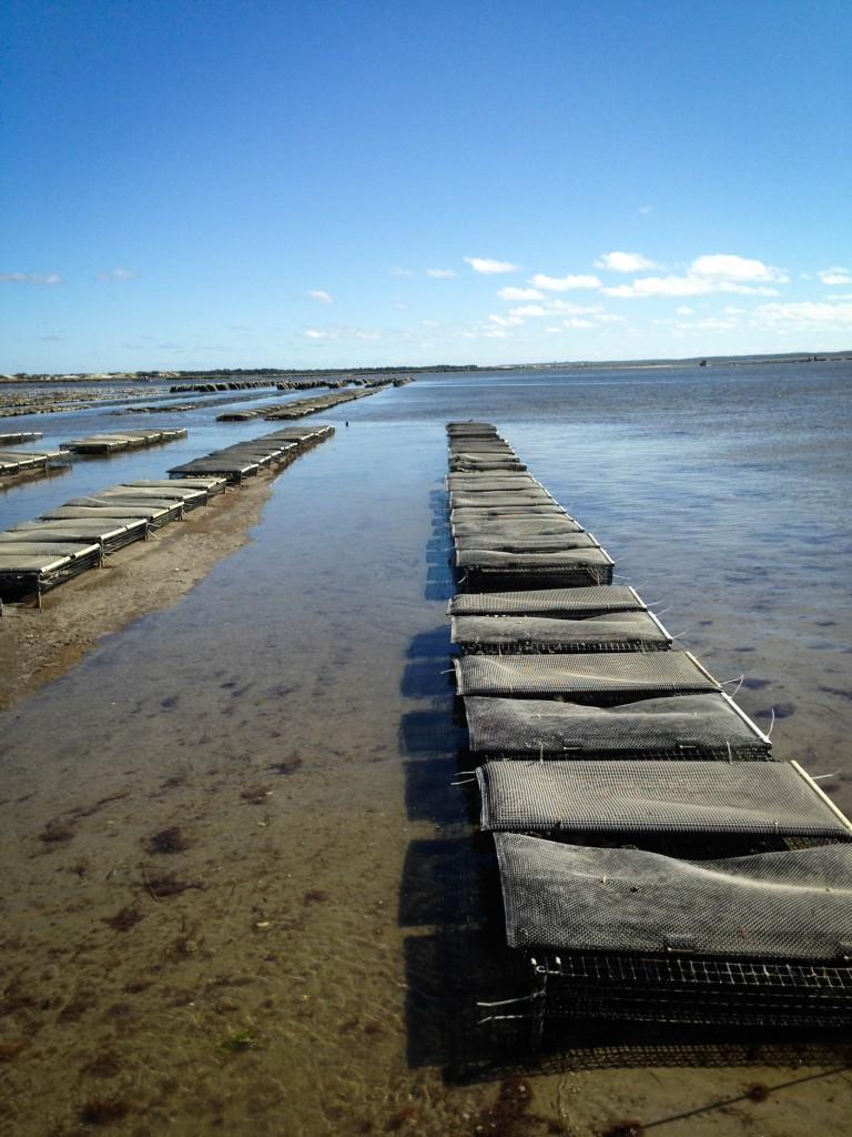 farms- oyster farm II